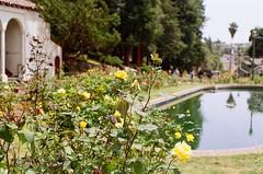 000670860028 (nautical2k) Tags: olympusom2n lomography400 film 35mm california oakland marcom rose garden