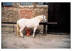 (schlomo jawotnik) Tags: 2019 juni kleinflöthe pferd schimmel reiterhof ponyhof schlomostierwelt film analog usw