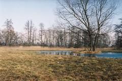 Marsh (LowLife1911) Tags: tree marsh takumar pentax kodak film olomouc nature pond spring natural scenery water trees forest grass