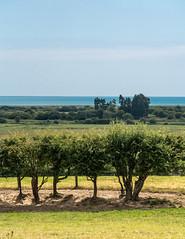 15_145944_2828_7RM3.jpg (Martin Alpin) Tags: hooelevels hedges sea sky