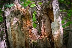 Wood (Burnett0305) Tags: baum bäume frühling germany landscape landschaft landschaftnatur natur nature nikond850 pflanzen saaleorlakreis spring thuringia thüringen country green grün outside plants tree wood