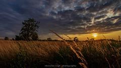 Summer feeling (fotos_by_toddi) Tags: fotosbytoddi voerde niederrhein nrw nordrhein westfalen wolken sony sonya7 sky sonyalpha7 sun sonne sonnenuntergang stimmung sunset deutschland drausen germany gras gelb weizen weizenfeld clouds cloudy wolke a7 a7m3 a7miii a7iii sonya7m3 sonyalpha7iii sonyalpha7m3 sonya7iii tamron1530 tamron strahlen