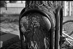 Tight (Berggren81) Tags: leica m4 sv blackwhite tmax400 analouge ishootfilm summilux35mm street semester