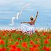 Poppies # 05
