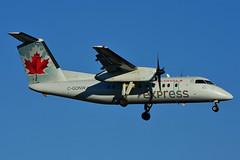 C-GONW (Air Canada express - JAZZ) (Steelhead 2010) Tags: aircanada aircanadaexpress jazz yyz creg bombardier dehavillandcanada dhc8 cgonw dhc8100 dash8