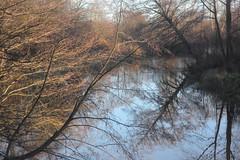 "from the series ""twilight stories"" (Mindaugas Buivydas) Tags: lietuva lithuania color autumn fall november yellow tree trees river šyša memelland evening eveninglight twilight mindaugasbuivydas"