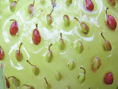 Patterns in Nature (LookaroundAnne) Tags: macromondays patternsinnature macro fruit strawberry