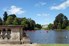 (and the moon rose) Tags: sheffieldpark eastsussex sussex uk england nationaltrust garden formalgarden waterlily flower waterlilyfestival pond lake