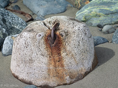 Wood Face Abstract (SpyderMarley) Tags: rock face rockface beach vancouverisland sand rocks cute funny nature macro tokina100mmlens shadow texture pattern jordanriver loggingpiling decayingloggingpier patternsinnature rust