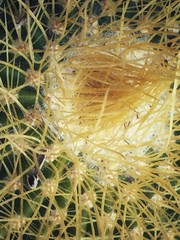 Patrones naturales (labrochina) Tags: patternsinnature macromondays