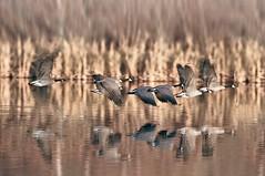Last Autumn - departure (EOSXTi) Tags: autumn birds departure
