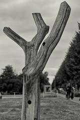 Ein toter Baumstamm (Pascal Volk) Tags: brandenburg lübbenauspreewald lübbenau lubnjowbłota lubnjow oberspreewaldlausitz osl górnebłotałužyca niederlausitz dolnałužyca delnjałužica spreewald błota poststrase canoneosr canonrf24105mmf4lisusm 105mm monochrome einfarbig sepia sommer summer verano skulptur sculpture escultura baumstamm tronco trunk log dxophotolab dxosilverefexpro nikcollection