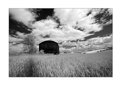 Hay barn and wheat field (david.hogan7) Tags: canon 750d converted ir 720 infrared black white fine art landscape summer clouds trees wheat field south downs national park tichborne england efs 1018mm wide angle hay barn farm