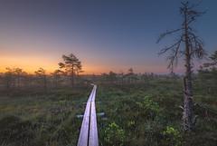 Valkmusa morning (Jyrki Salmi) Tags: jyrki salmi pyhtää valkmusa finland swamp morning sunrise duckboards