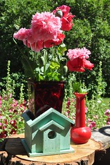 4 Mum ;) (Jeannette Greaves) Tags: 2019 mum flower bird house feeder cmwdred red poppies hollyhocks pink