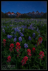 Painted by Tatoosh (Aaron M Photo) Tags: cascade cascaderange d800 mount mountrainier mounttacoma mounttahoma mtrainier nps nationalpark nikon pacificnorthwest park rainier summer tacoma tahoma tatoosh tatooshrange washington dusk flowers indian indianpaintbrush landscape lupine nature night paintbrush purplelupine stratovolcano volcano wildflowers ashford unitedstates