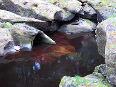 The Strid (scrappy annie) Tags: thestrid boltonabbey wharfe wharfedale yorkshire water rocks river riverbank