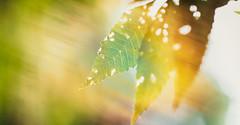 to feel peace and life in the forest (Caucas') Tags: sinop samsun trazon ankara karadeniz blacksea sunlight sun leaves yaprak istanbul izmir alanya antalya türkiye turkey güneş orman sarı yellow green nature doğa life yaşam free gün ışığı haze 85mmf18g nikon d7000 rosie red tree ağaç rays ışın ışınlar ayancık