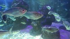 Sealife Blackpool (mesmoland) Tags: blackpool mesmoland fish salt water