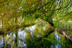 Tribute to Monet (Marco Pignalberi) Tags: nature river autumn italy look view landscape photo photographer photography picture beauty beautiful pretty amazing dream green