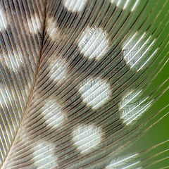 Macro Mondays: Patterns in Nature (Gero Brandenburg) Tags: patternsinnature macromondays