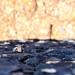 Eidechse im Loch zwischen Mauersteinen in Agulo auf La Gomera, Spanien
