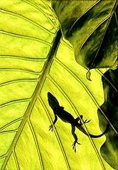 Lizard by Prisma App (lamarstyle) Tags: lamarstyle 2019 lizard green nature prismaapp