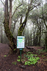Starting point of Cañada de Jorge hiking trail in the Garajonay National Park on La Gomera, Spain
