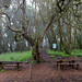 Picnic area in the Garajonay National Park on La Gomera, Spain