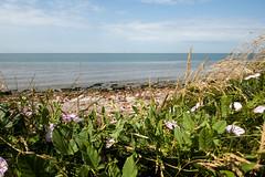 Crosby Beach (kh1234567890) Tags: panasonic tz100 zs100