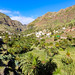 Palm trees in the valley of Valle Gran Rey on La Gomera, Spain