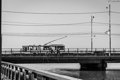 DSC_0259 (WT_fan06) Tags: trolleybus targu jiu dac rocar 212e