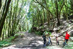 E-bike tour in the Garajonay National Park on La Gomera, Spain