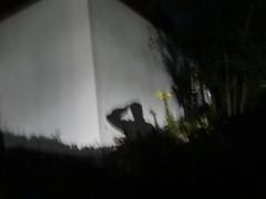 creeping shadows 002 (bratispixl) Tags: sony stadtrundweg traunreut chiemgau oberbayern germany bratispixl nature blumen tiere garten naturgarten faltermonitoring tag texte architektur wetter panoramen unterwegs alben sonnenfotografie working pflanzen outdoor indoor indexbilder falter gras baum landstrase green bird nachts