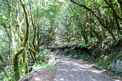 Walking trail in the Garajonay National Park on La Gomera, Spain