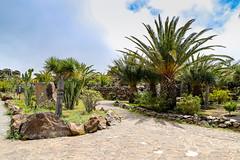 Garden with cacti and palm trees at Mirador César Manrique observation deck in Valle Gran Rey on La Gomera, Spain