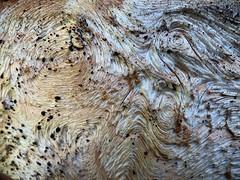 Gnarly weathered wood patterns (BeaLeiderman) Tags: macromonday patternsinnature