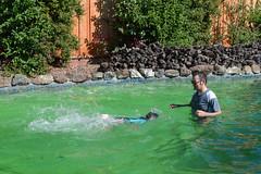 DSC_0036 (rlnv) Tags: california bayarea nikond3300 1855mmf3556gvrii birthday sunnyvale pool tomás nick