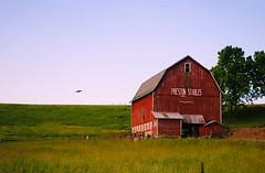 Preston Stables - Juda, Wisconsin (Cragin Spring) Tags: wisconsin wi midwest rural unitedstates usa unitedstatesofamerica barn red redbarn field prestonstables stable farm juda judawi judawisconsin