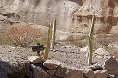 Sandos San Blas Hotel, Tenerife, Canary Islands (wildhareuk) Tags: canaryislands canon canoneos500d garden hotel sign spain tamron18270mm tenerife tenerife2019 euphorbia naturereserve plant sandossanblas tamron wood img9622dxo index