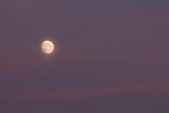 Dusky Moon 14 July 2019 (Sculptor Lil) Tags: moon london canon700d waxinggibbous dusk