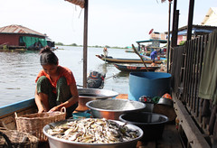 Woman processing fish in Peam Bang Commune, Kampong Thom Province, Cambodia