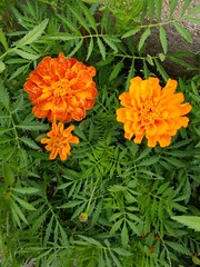 20190715_151840 (tomcomjr) Tags: samsung galaxy s7 android phonecamera flowers orange yellow purple green white red pink