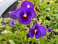 20190715_092803 (tomcomjr) Tags: samsung galaxy s7 android phonecamera flowers orange yellow purple green white red pink