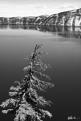 Impressions of Crater Lake: Lonesome Pine (g-liu) Tags: trees sky blackandwhite usa lake west reflection water monochrome oregon contrast volcano daylight nationalpark sony july evergreen crater caldera round daytime slopes partlycloudy 2018 a6500 darktable
