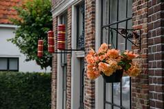 Begonia (Julysha) Tags: begonia flowers edam acr summer july 2019 thenetherlands noordholland town sigma241054art d850