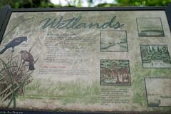 Wetlands (Thea Prum) Tags: greatmeadows nationalwildliferefuge wildlifesanctuary sony a7riii concord samyang 35mm f14