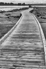 Estuary Walkway (197/365) (johnstewartnz) Tags: canon canonapsc apsc eos 100canon 7dmarkii 7d2 7d canon7dmarkii canoneos7dmkii canoneos7dmarkii 2470 2470mm ef2470mmf4l canonef2470f40l blackandwhite bw monochrome niksilvereffectspro estuary walkway estuarywalkway southnewbrighton southnewbrightondomain southshore 197365 day197 onephotoaday onephotoaday2019 oneaday 365project project365