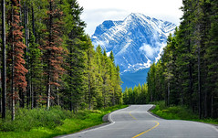 mountain drive; Alberta, Canada (Jane Olsen) Tags: mountain snow trees grass road alberta landscape