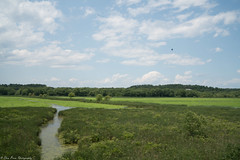Great Meadows National Wildlife Refuge (Thea Prum) Tags: greatmeadows nationalwildliferefuge wildlifesanctuary sony a7riii concord samyang 35mm f14